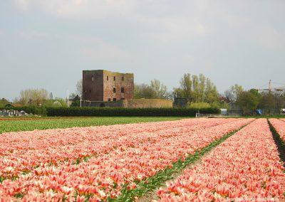 Ruine_Teylingen_Cultureel_Erfgoed_Landschapsarchitectuur_Groen_Erfgoed_Debie_en_Verkuijl_01